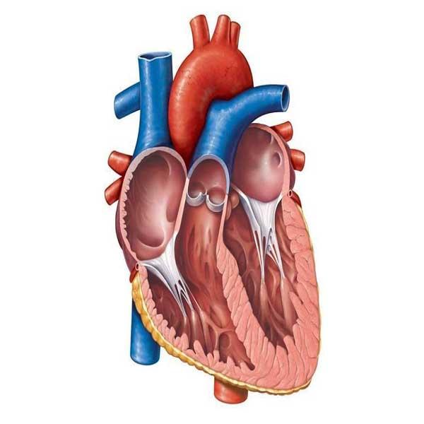 مشکلات قلب