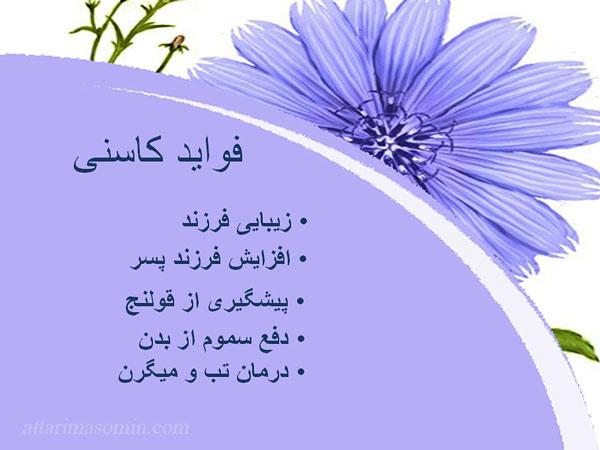 خواص کاسنی در طب اسلامی
